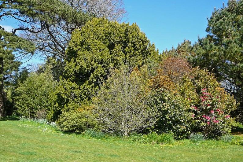Carwinion Garden