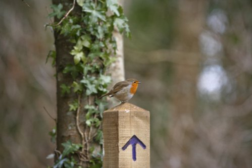 Biking in Tehidy Woods - Cycle Routes A Robin