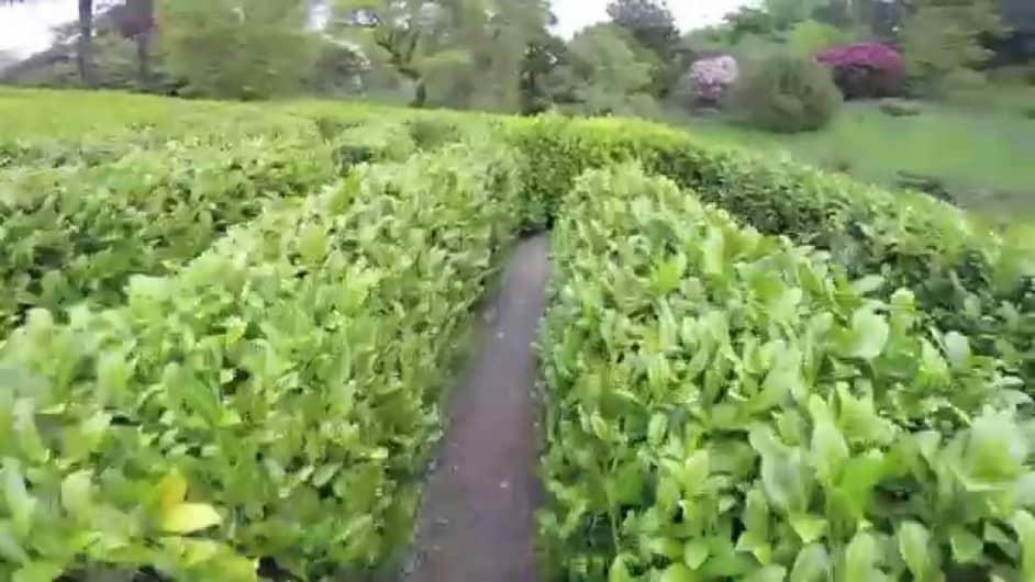 Glendurgan Garden Maze