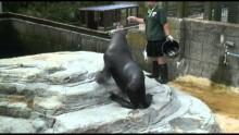 National Seal Sanctuary Gweek