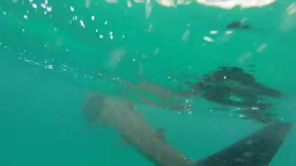 Diving Seals Lands End