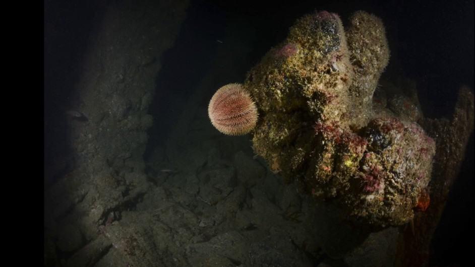 Syracusa Shipwreck Dive