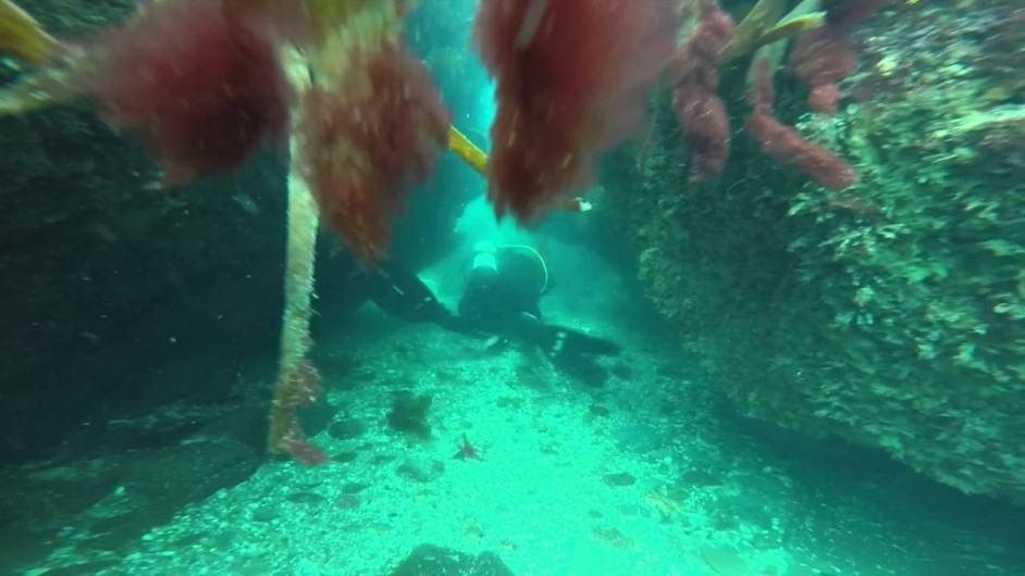 Pendennis Cave Dives