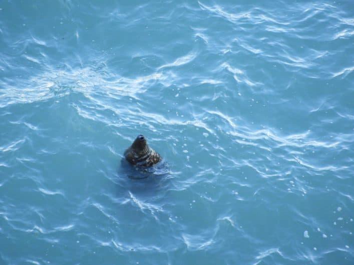 A Seal at Hells Mouth